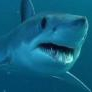 Красивые и блатные номера на сайте - последнее сообщение от Shark